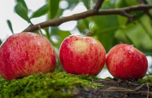 J3C dans les Pommes !